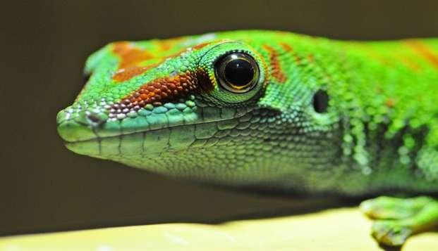 Partez à la découverte d'animaux exotiques à Royan !