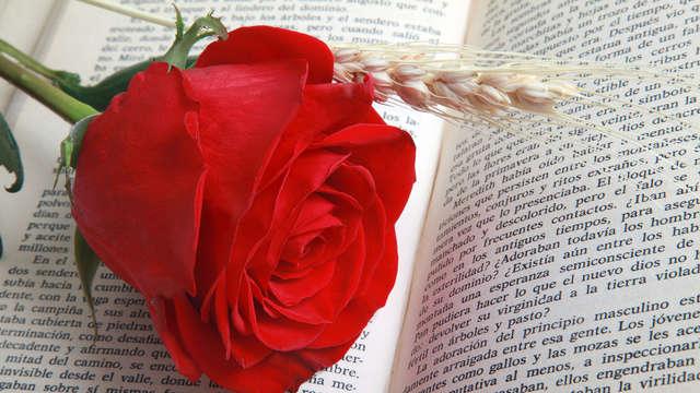 Rose offerte