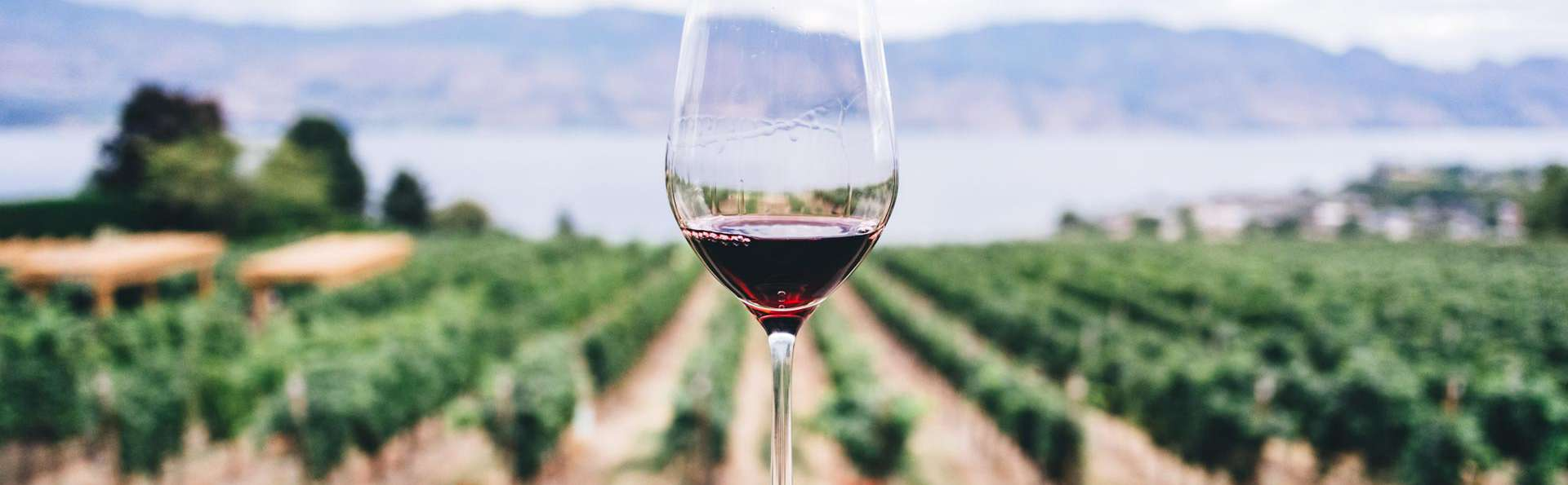Élégance et gastronomie avec dégustation de vin à Chianciano Terme