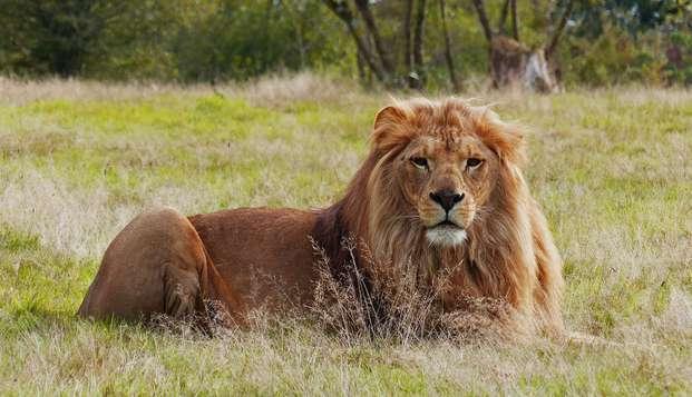 Week-end à Nantes avec safari à la Planète Sauvage