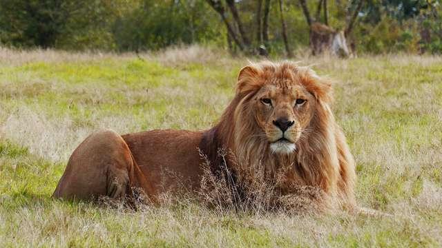 Week-end en famille à Nantes avec safari à la Planète Sauvage