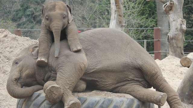 Toegangsbewijs voor het dierenpark in Amersfoort voor 2 volwassenen