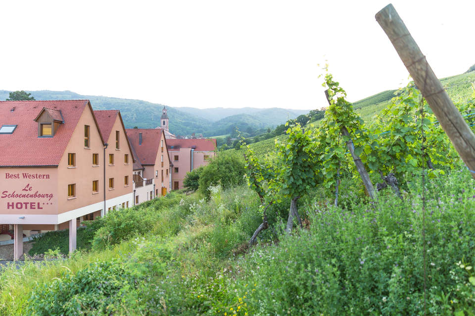 Best Western Hôtel Le Schoenenbourg - exterieure_vignoble.jpg