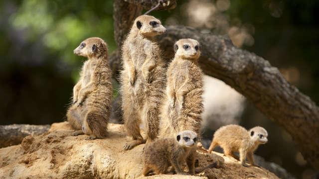 BEST WESTERN PLUS Paris Val de Bievre - famille suricat