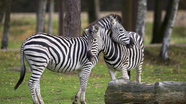 BEST WESTERN PLUS Paris Val de Bievre - zebres