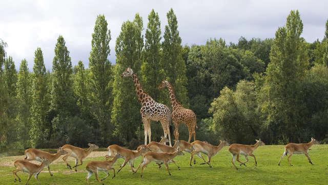 BEST WESTERN PLUS Paris Val de Bievre - girafes et lechwes