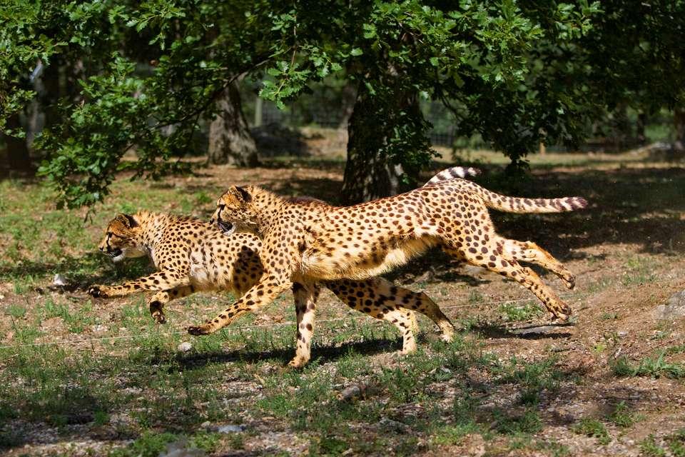 Mercure Relays du Château Rambouillet - Zoo de Thoiry