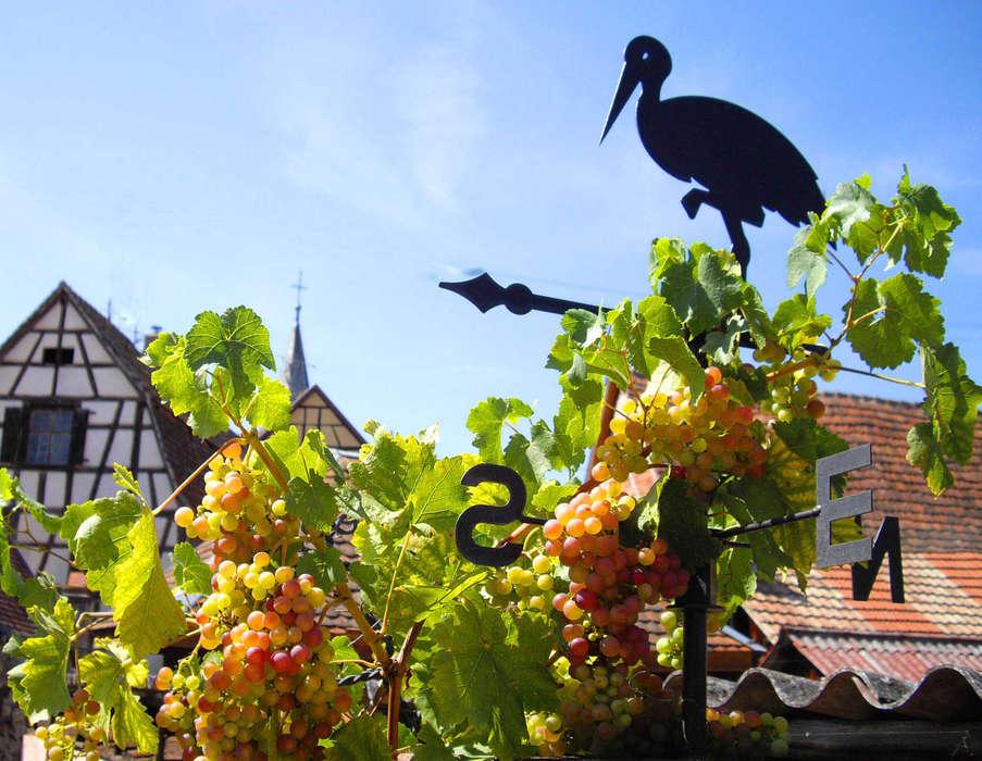 Résidence Les Rives de la Fecht - vigne_sur_balcon.jpg