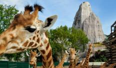 1 Entrée au ZooParc de Paris pour 2 adultes