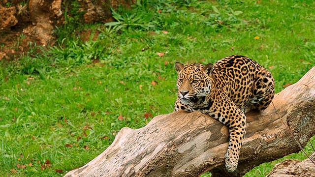 Escapada con entradas al Parque de la naturaleza de Cabárceno (desde 2 noches)