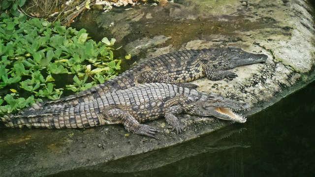 Entrée à la Planète des Crocodiles pour 2 adultes