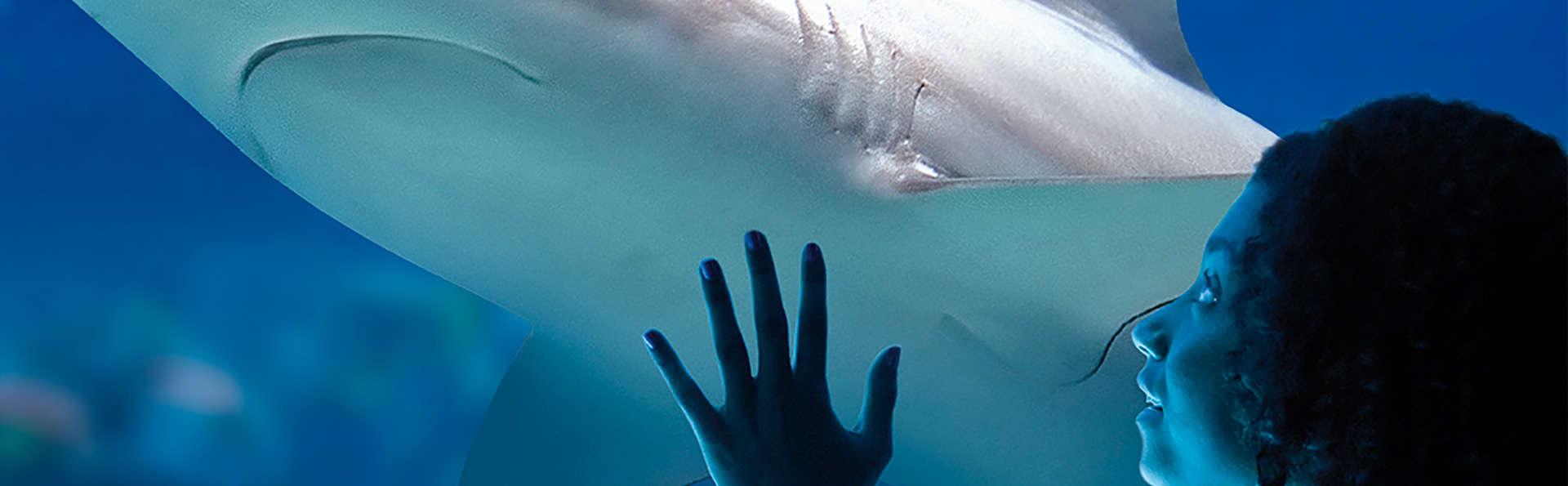 Découvrez le Sea Life Blankenberge