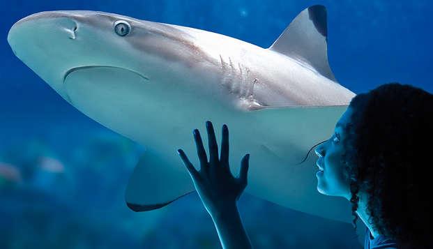 Kijk je ogen uit in Sea Life Blankenberge