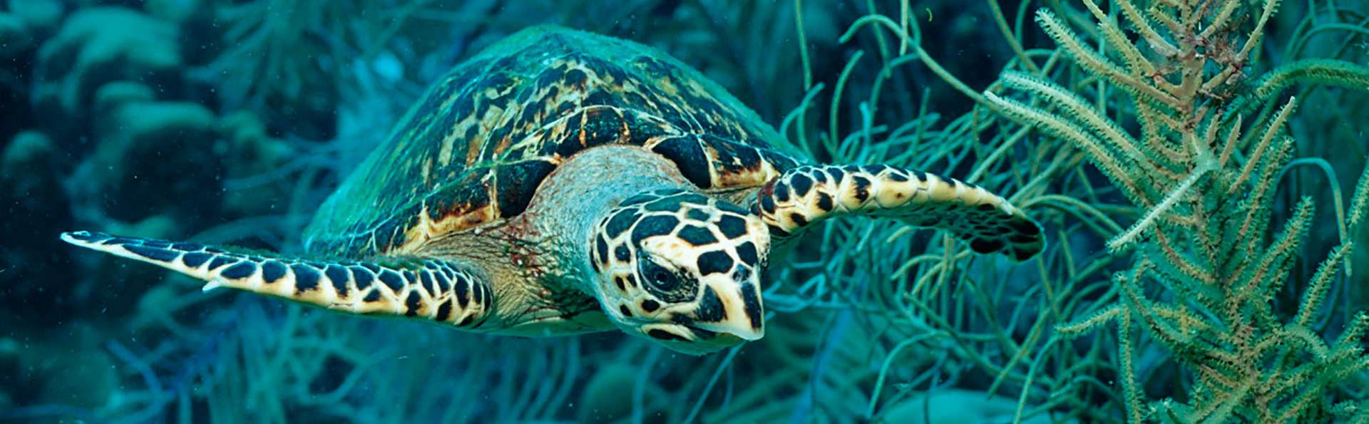 Admira el mundo submarino en el Sea Life