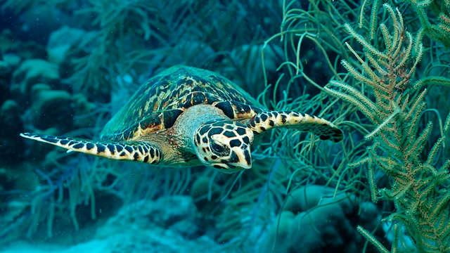 Bewonder de onderwaterwereld in Sea Life