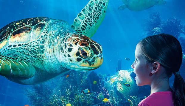 Rendez visite aux phoques, aux tortues ou aux hippocampes