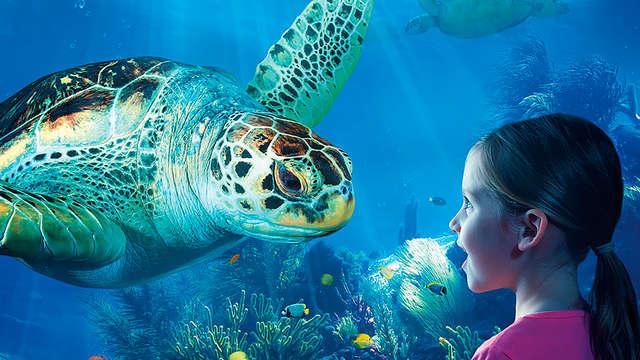 Breng een bezoekje aan de zeehonden, schildpadden of toch de zeepaardjes