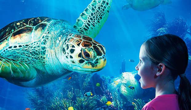 Ontdek Sealife en de Belgische kust met de kusttram (2 kids gratis)