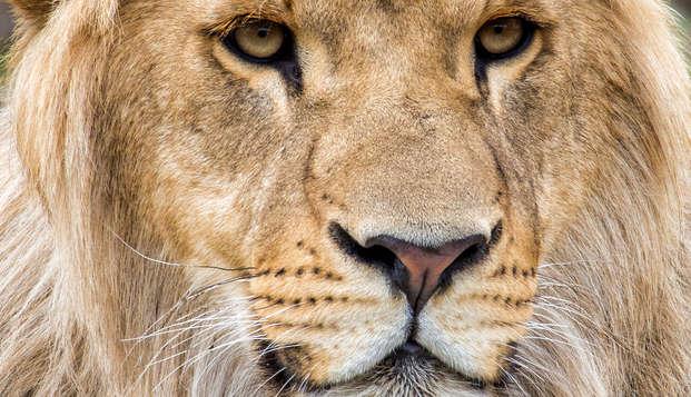 Diversión en familia en el safari de Beekse Bergen de Breda