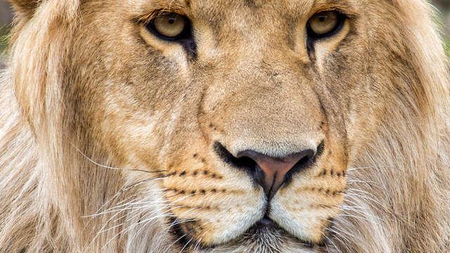 Familieweekend met toegang tot safaripark Beekse Bergen in Breda