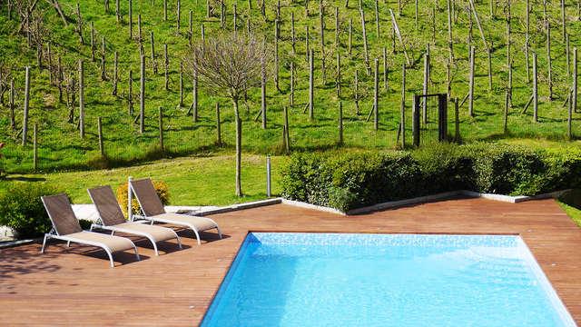 Sumérgete en la belleza de los viñedos en Nivelles