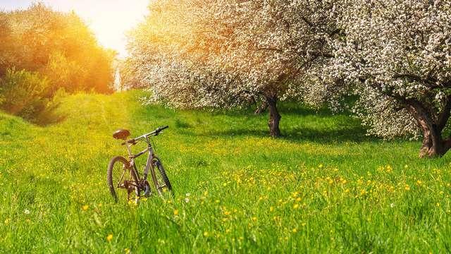 1 Huur van fiets voor 2 volwassenen