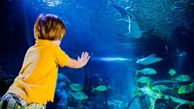 Familie-uitje met toegang tot het Aquarium en bezoek aan het Grévin Museum!