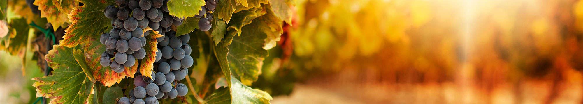 Escapadas fin de semana Ruta de vinos en Italia