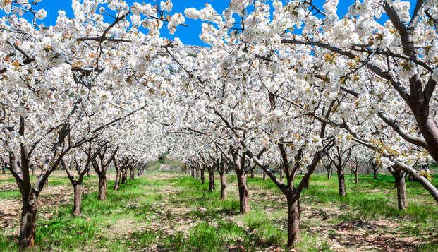 ¡En Marzo visita el cerezo en flor! Disfruta de las mejores vistas con cena en hotel 4*