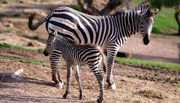 Escapada con entradas para el ZooParc de Terra Natura en Murcia