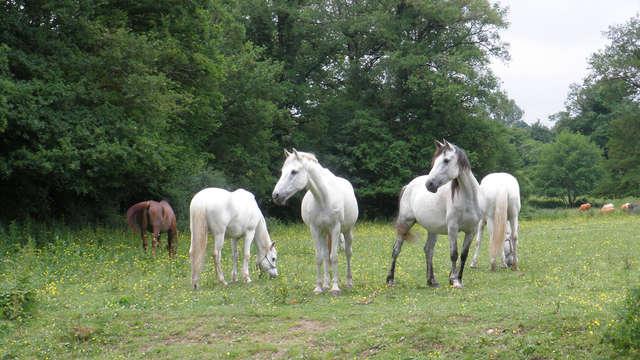 Hotel Les Dryades Golf Spa - horse