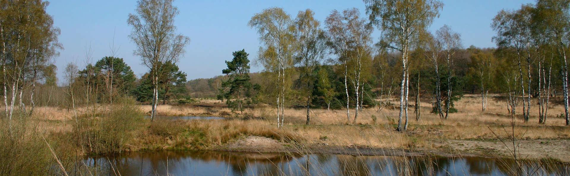 Landgoed Kasteel Daelenbroeck  - EDIT_Meinweg_Boshotel_groot1.jpg