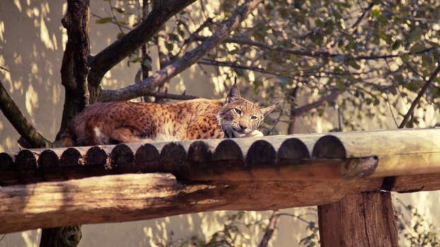 Ontdek het Forestia dierenpark nabij Luik
