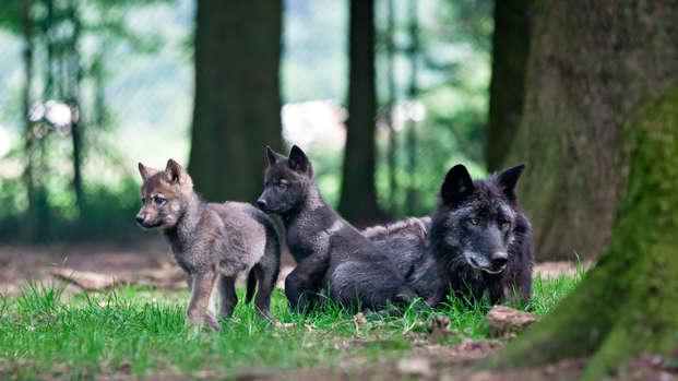 Escápate a Lieja y descubre animales salvajes en el parque Forestia
