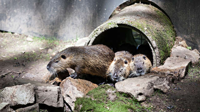 Découvrez le parc animalier Forestia près de Liège