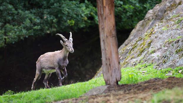 Partez à la decouverte du parc Forestia