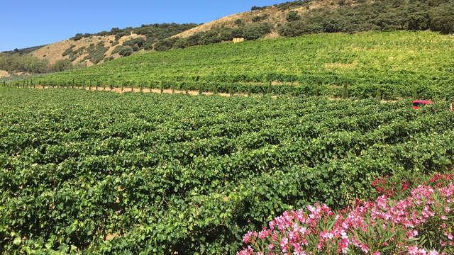Witte dorpjes en route van wijn: ontdek Ronda met bezoek aan wijngoed