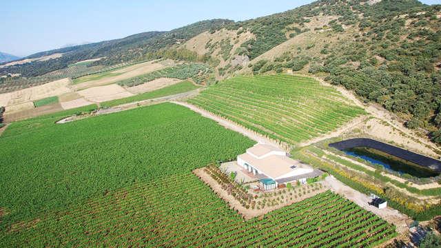 Ontdek de streekwijn van Ronda met bezoek aan het wijngoed van Morosanto