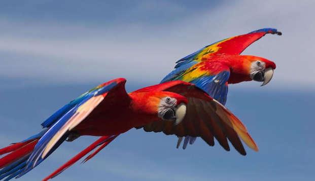 Partez à la découverte du Parc des Oiseaux, près de Lyon (entrée incluse)