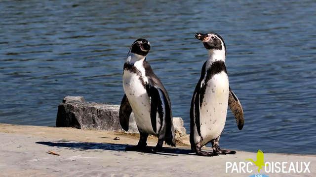 Escapade en famille et découverte du Parc des Oiseaux, près de Lyon