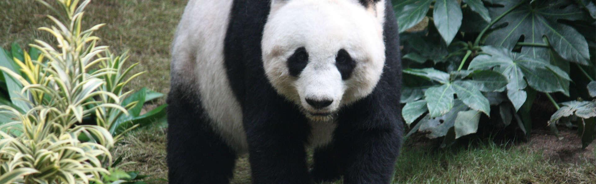 Week-end avec accès à Adventurous Ouwehand Zoo