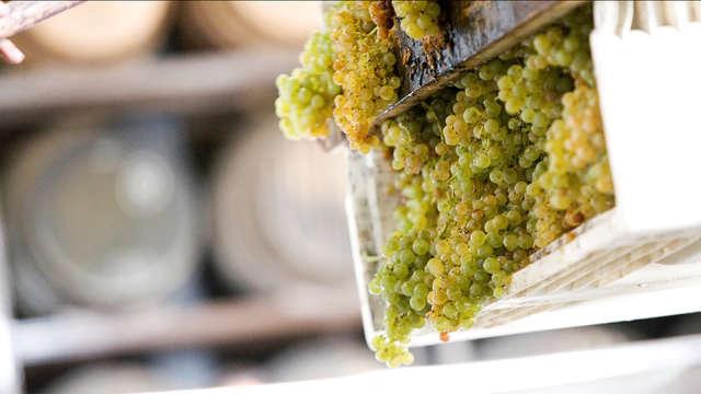 Weekend di degustazione vini con visita alle cantine Tio Pepe