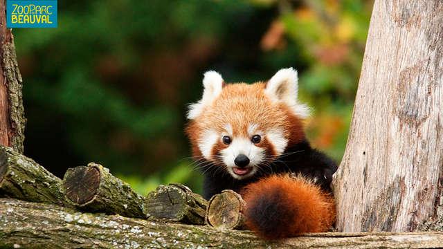 Visitez le ZooParc de Beauval en séjournant près d'Orléans