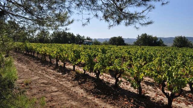Week-end découverte au cœur d'Avignon avec dégustation des vins de Châteauneuf-du-Pape