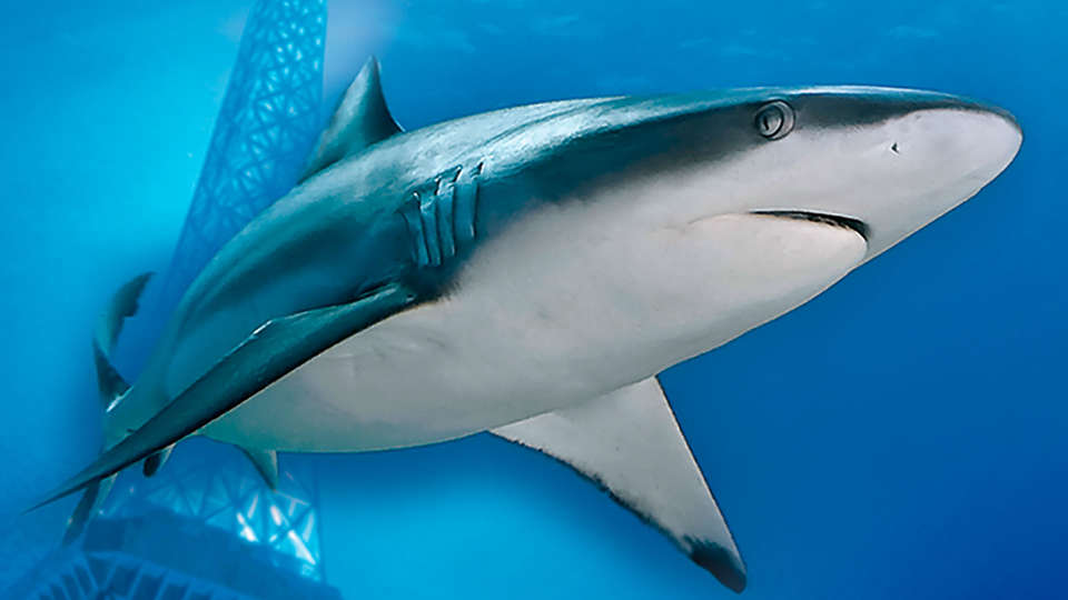 Hôtel Palais de Chaillot - EDIT_aquarium1.jpg