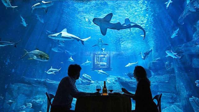 Novotel Paris La Defense - aquarium