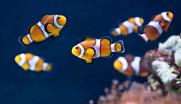 Escapada en familia con entradas para el Aquarium Sea Life (hasta 4 personas)