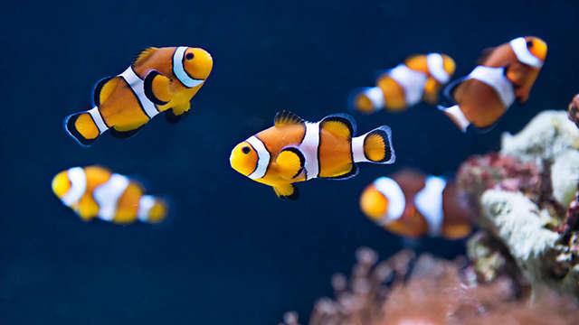 Escapada familiar con entradas para el Aquarium Sea Life