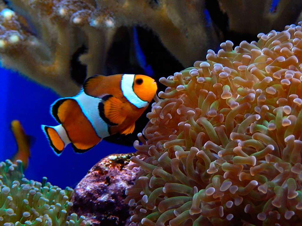Séjour Saint-Malo - Week-end en famille ou entre amis avec découverte de l'Aquarium de Saint-Malo  - 4*