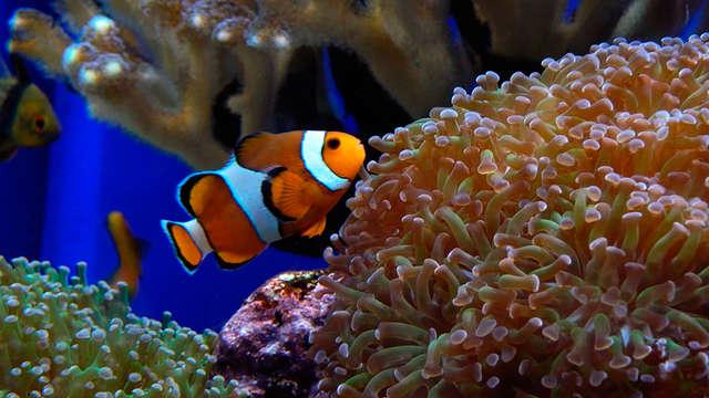 Week-end en famille ou entre amis avec découverte de l'Aquarium de Saint-Malo